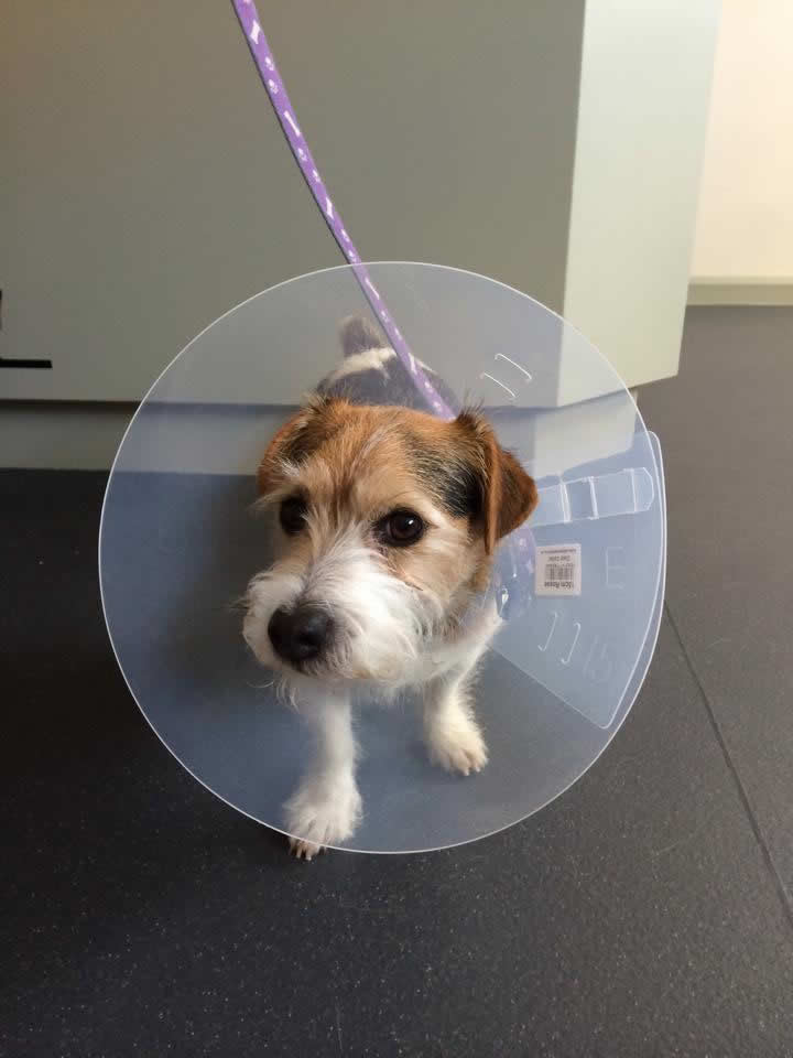 Buddy visits Melton Vets
