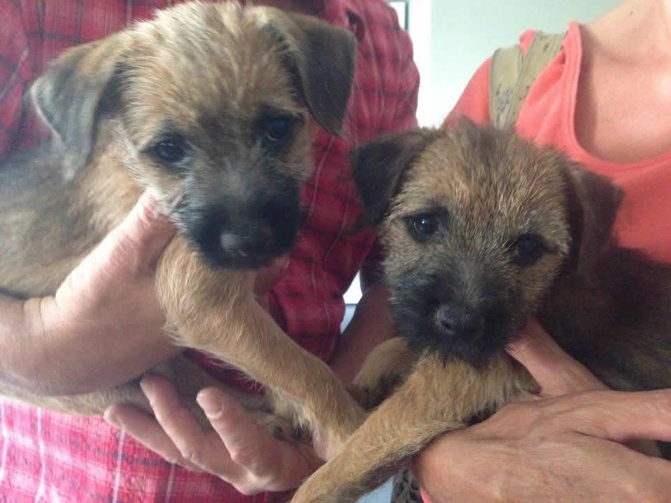 Fudge & Smudgie visit Melton Vets