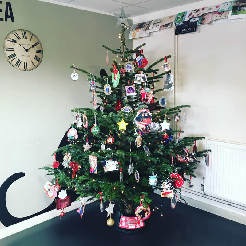 christmas tree melton vets