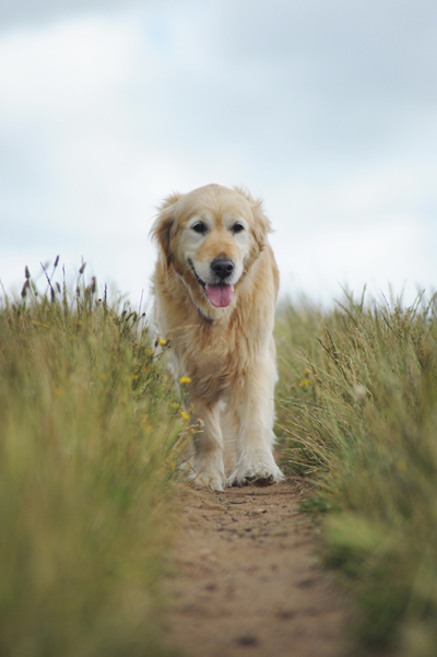 walking retriever