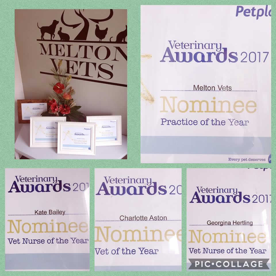 Petplan nominations Melton Vets