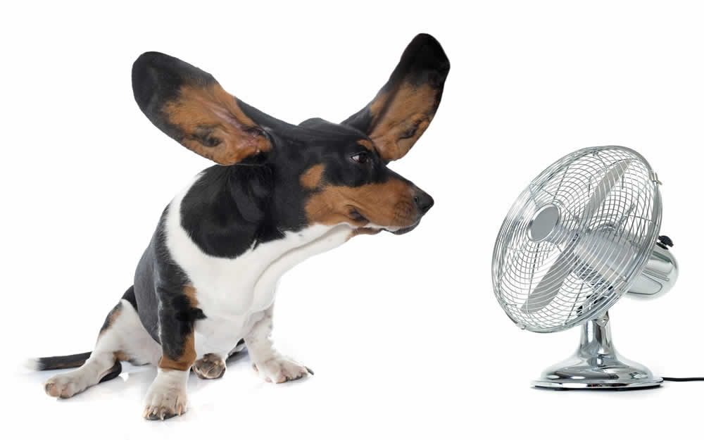 Prevent heatstroke in this hot weather!